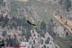 vautour_4179
