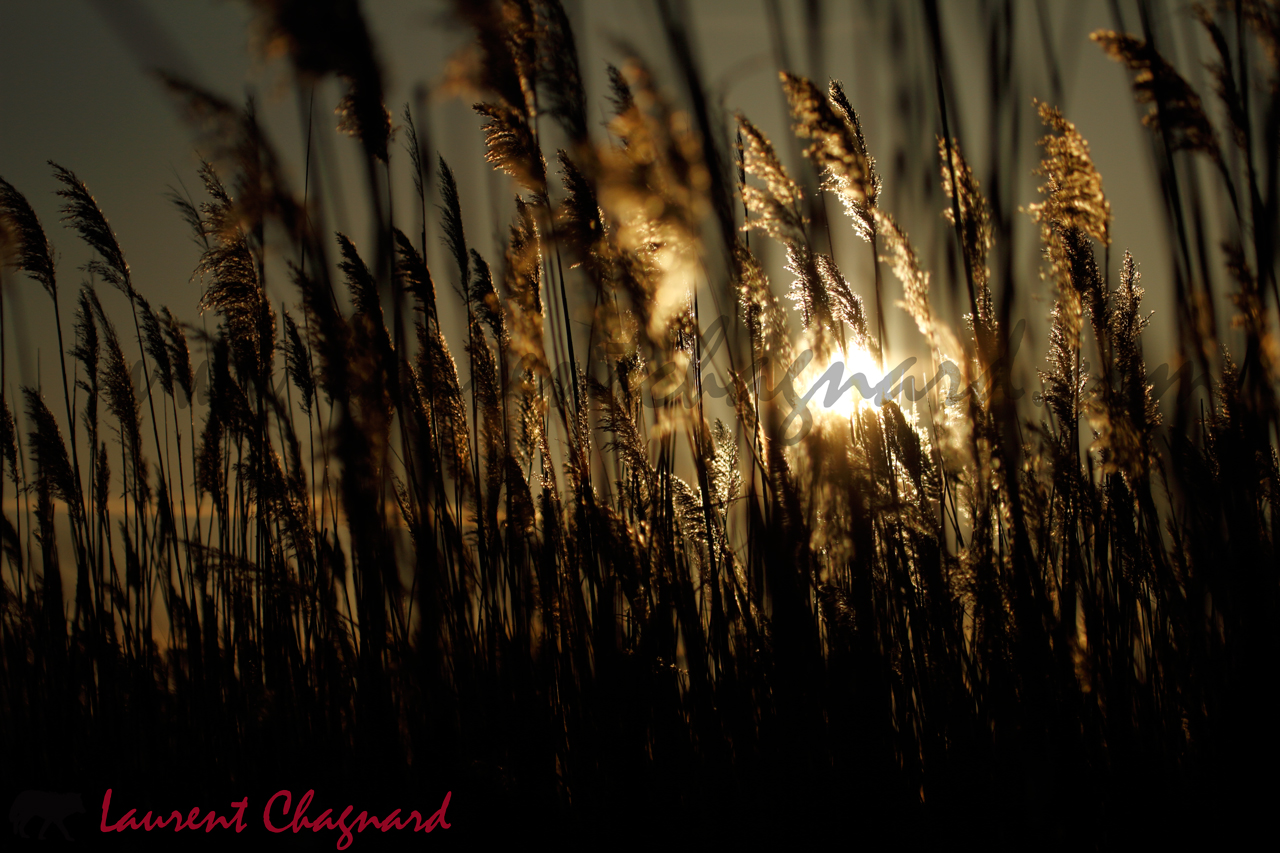 herbes hautes_0435