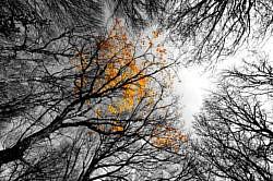 N-000111 Forêt du Glandasse - Vercors