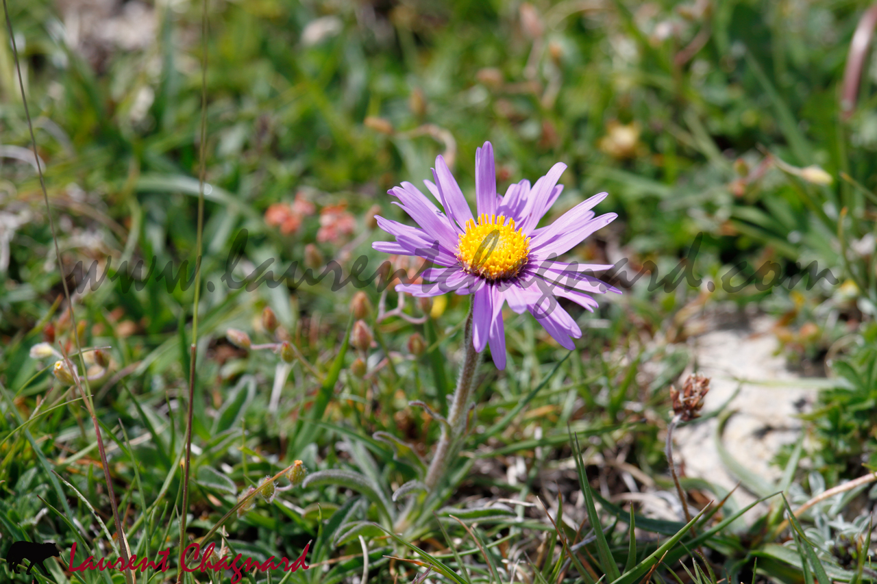 aster_0774