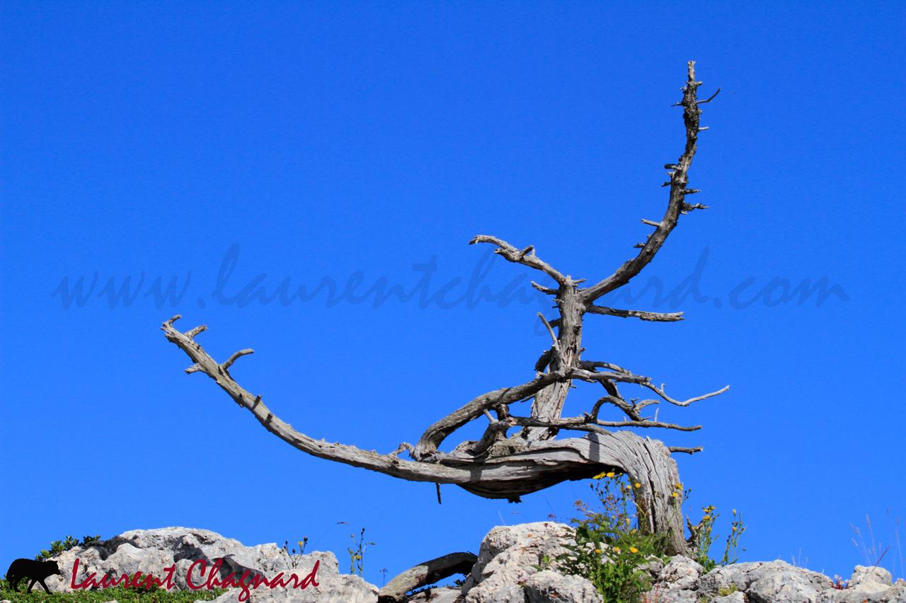 arbre_4306